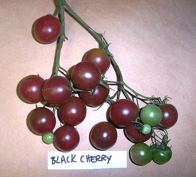 Black_cherry_2