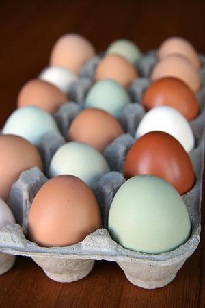 Eggsbypim_5