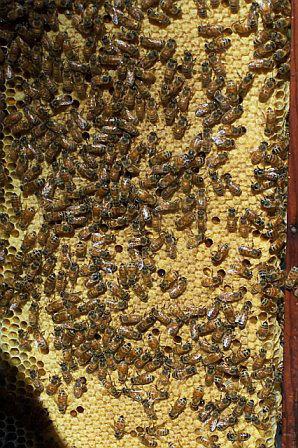 Beescombbysusie